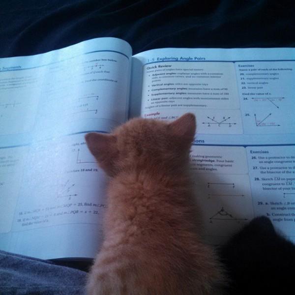 Everyone loves math
