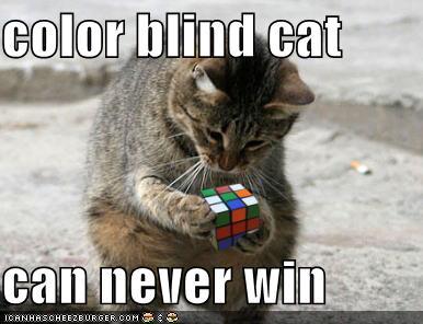 cat solving rubiks cube