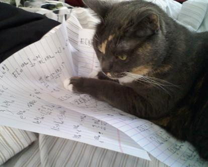 cat-doing-math.jpg