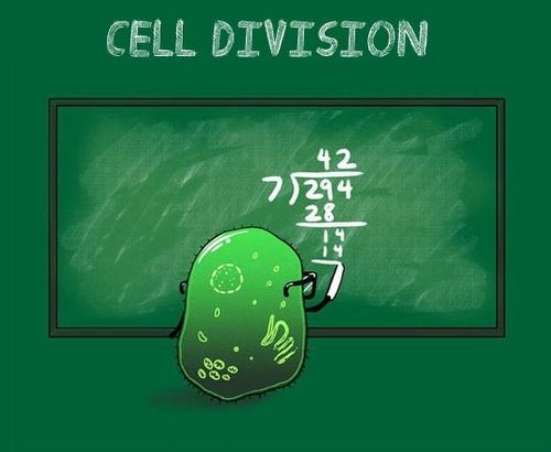 cell-division