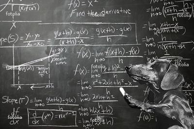 dog-math.jpg